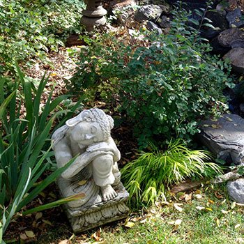 a peaceful backyard garden designed by Mary Wright